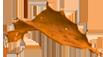 taca-taronja